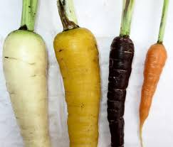 carrot cultivation guidance and advice