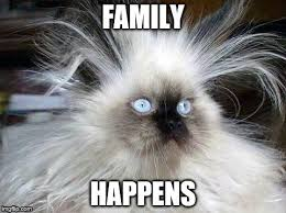 Crazy Cat Memes - crazy hair cat meme generator imgflip