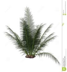 onychiopsis prehistoric fern 3d render stock illustration
