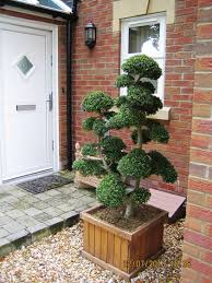 buxus sempervirens in vaso i want this cloud and pom pom topiaries box buxus sempervirens