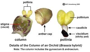 What Is An Orchid Flower - flower terminology part 1