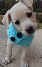 126 best puppies images on pinterest animals baby animals and