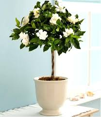 best indoor plants for low light good indoor plants for bedroom best indoor plants low light ideas on