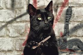 gatti divani socialdogcat cosa fare se il gatto si fa le unghie sul divano e