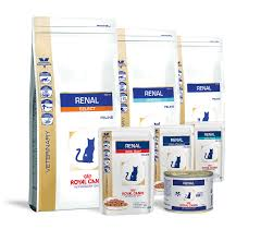 royal canin launches new renal diets vetpol community