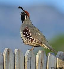 Nevada birds images Birdingpal birdwatching tours in arizona usa jpg