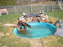 Backyard Designs With Pool Best 25 Backyard Dog Area Ideas On Pinterest Outdoor Dog Area