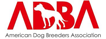 american pitbull terrier breeders st louis american dog breeders association american pit bull terrier registry