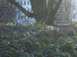 travel in a garden the winter garden at battersea park london