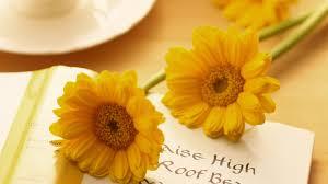 pretty wallpapers for desktop flower yellow flowers flower nice nature books sweet cute beauty