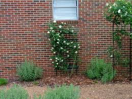 our garden 2010 u2013 linda u0027s hibiscus medley u0026 more paul from alabama