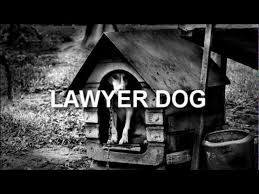 Lawyer Dog Memes - lawyers corgis and the power of trending topics az attorney