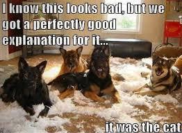 resume templates janitorial supervisor meme doge wallpaper meme 25 funny dog memes part 4 dog memes and dog