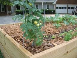 Small Vegetable Garden Ideas Pictures Small Vegetable Garden Design Vegetable Garden Planner