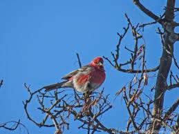 365 days of birds duluth minnesota based birder photographer