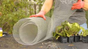 how to keep rabbits away from lettuce garden space youtube