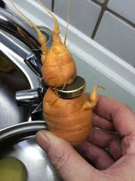 german wedding ring german unearths lost wedding ring wrapped around carrot