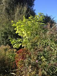 Decorative Shrubs Free Images Tree Nature Evergreen Botany Flora Houseplant