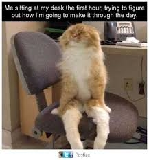 Cat Sitting Meme - dopl3r com memes me sitting at the desk the first hour trying