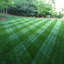 fescue cut with a walker mower landscape pinterest lawn