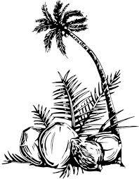 coconut tree free vector in adobe illustrator ai ai vector