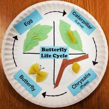 butterfly life cycle using pasta and paper plates this was from