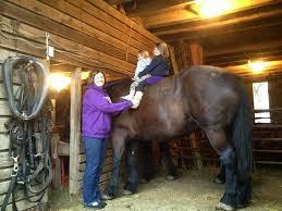 amish horses horse barn