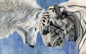 wolf quotes emotional sad white wolf with a tiger d for wallpaper