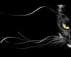rare cat wallpapers black cat wallpapers best black cat wallpapers in high quality