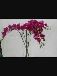 Lisianthus Flower Purple 25in Purple Cymbidium Orchid Stem Diy Wedding Centerpieces Afloral