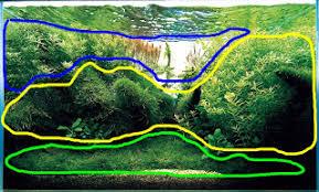 Java Moss Aquascape Aquatic Eden Aquascaping Aquarium Blog