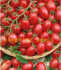 online get cheap rare tomatoes seed aliexpress com alibaba group