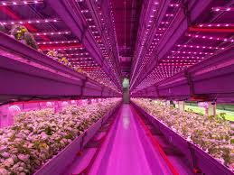 Pics Of Light by How Leds Are Making Weed Better Wired