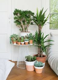 Plants For Bedroom Beautiful Plants For Bedrooms Feng Shui Pictures Dallasgainfo