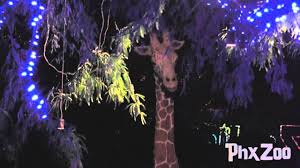 Zoo Lights Prices by Zoolights At The Phoenix Zoo Youtube