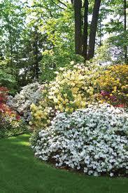 iowa native plant society everything about azaleas iowa gardener