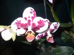 imagenes flores bellisimas flores bellisimas en los jardines de los aleros picture of los
