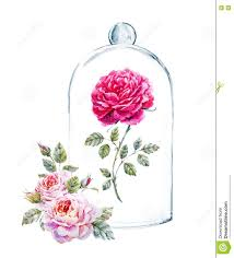 rose in a glass case stock illustration image 77897901