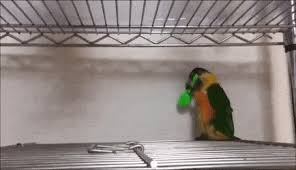 Funny Bird Memes - birb memes gifs search find make share gfycat gifs