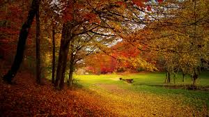 autumn wallpaper hd download free wallpapers for desktop
