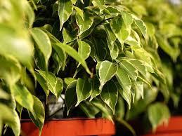 grünpflanzen im schlafzimmer diese pflanzen solltest du im schlafzimmer haben