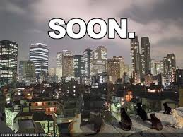 Soon Cat Meme - soon know your meme