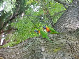 Melb Botanical Gardens by Birds Of Melbourne Maltzfamilyinaustralia