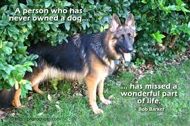 john muir dog quote dog photo quoto