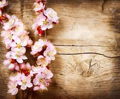 wood flowers blossom wood background stock photo picture and