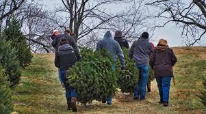 christmas tree recycling sites open in loudoun u2013 loudoun now