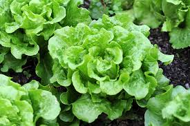 7 easy to grow vegetables you can plant this weekend porch advice