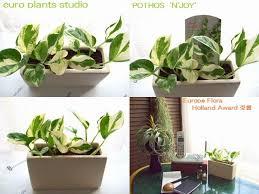25 trending ornamental plants ideas on purple pas