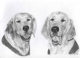 golden retriever drawings page 6 of 6 fine art america