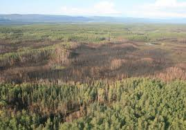 Usgs Wildfire Data by Landscape Effects Of Fire Frequency And Severity On Boreal Alaskan
